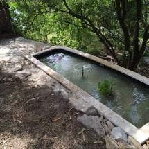 fish-pond-5